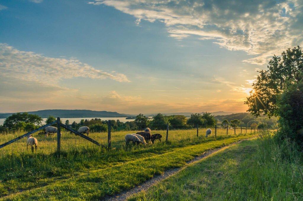 countryside-cropland-dawn-158179